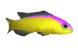 Jennifer Dottyback